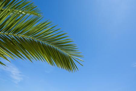 Green palm leaf over blue sky