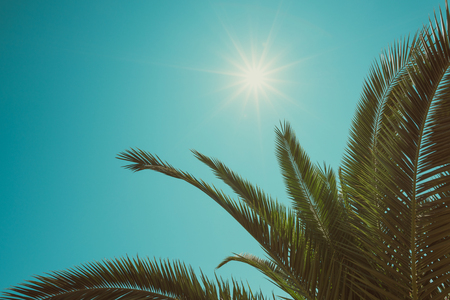 Vintage toned palm tree leaf border composition with shining sun and copy space Stock Photo