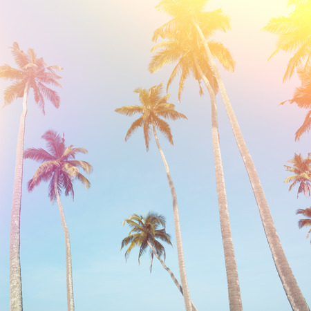 Palm trees vintage stylized with light leak Stock Photo