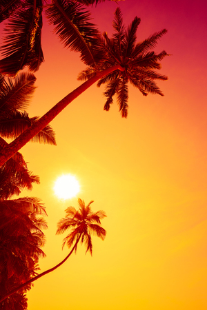Vivid tropical sunset Stock Photo