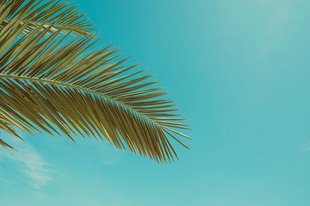 Palm tree leaf vintage toned