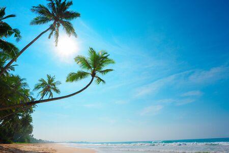 Tropical beach. Coconut palm trees on empty island resort beach. Stock Photo