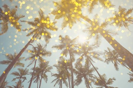 Palm trees vintage toned with shiny party bokeh glitter golden lights effect Stock Photo