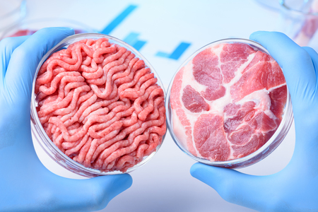 Two raw meat samples in laboratory Petri dishes in scientist hands. Clean meat concept.