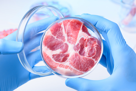 Meat in open laboratory petri dish. Lab meat examination concept.