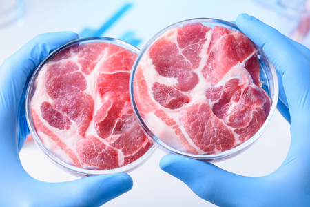 Meat samples comparison in laboratory Petri dish in scientist hands