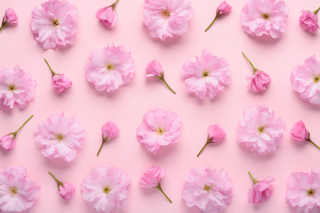 Floral pattern of sakura flowers and buds on pastel pink background. Soft cute flower pattern flat lay top view. Stock Photo