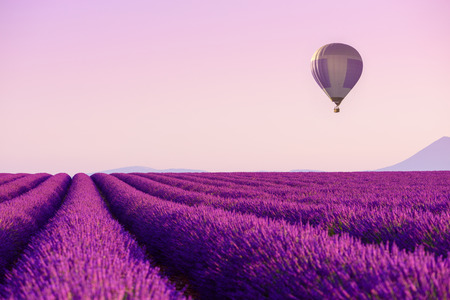 Lavender field rows with hot air balloon in sky near Valensole, Provence, France at summer morning