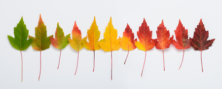 Autumn leaves rainbow gradient transition long horizontal banner top view Foto de archivo