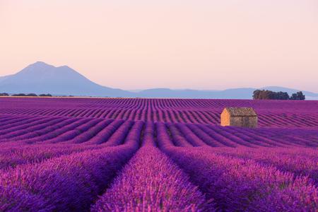Hermosa casa rural francesa antigua icónica en campos de lavanda en flor en la Provenza al amanecer.