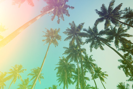 Coconut palm trees vintage toned. Palm tree summer beach sunny day retro stylized. Banque d'images