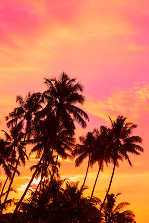 Tropical sunset coconut palm trees