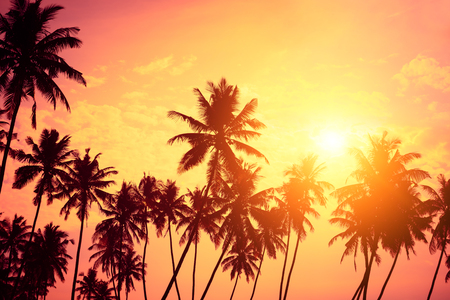 Tropical shore. Sunset beach palm tree silhouettes and sun down.