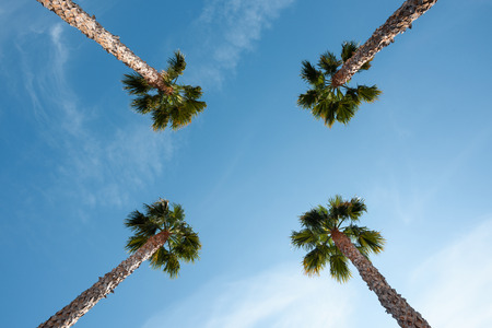 Four palm trees over blue sky perspective view with copy space Imagens
