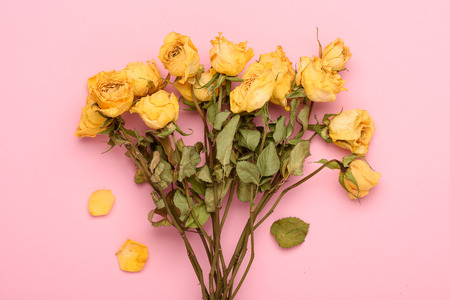 Dry yellow roses bouquet on pink pastel background Imagens