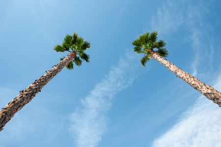 Two palm trees over blue sky on vacation beach perspective view with copy space