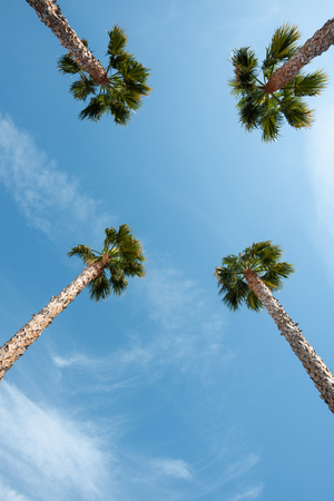Four palm trees over blue sky on vacation beach perspective view with copy space Imagens