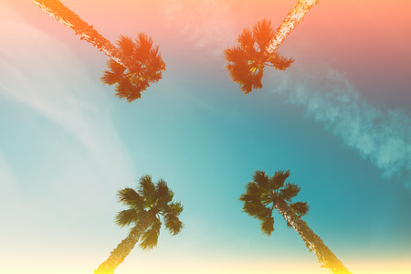 Four palm trees over blue sky perspective view with retro film light flare leaks