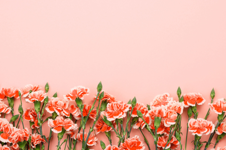 Border frame of carnation flowers on pastel pink background. Overhead top view with copy space.