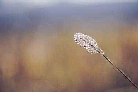 Shiny tiny dew drops on autumn grass macro