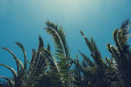 Tropical palm tree lush leafs