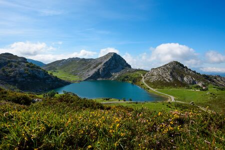 Enol lake in mountains with cows and sheeps on green pasture. National park Picos de Europa, Spain