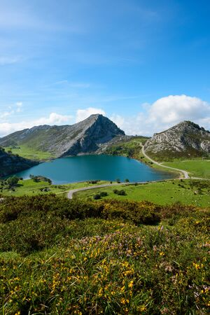 Enol lake in mountains with cows and sheeps on green pasture in national park Picos de Europa, Asturias, Spain