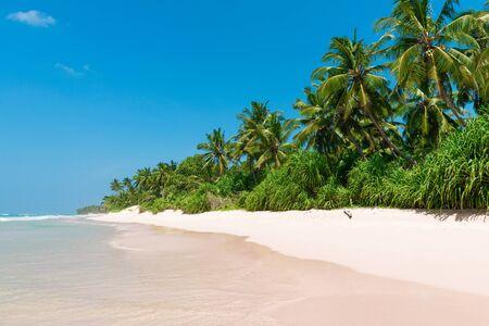 Coconut palm trees on sandy island tropical beach resort