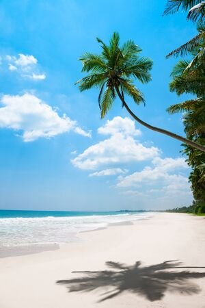 Tropical vacations, clean white sand beach and coconut palm tree