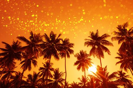 Coconut palm trees at sunset with magic shiny party lights overlay