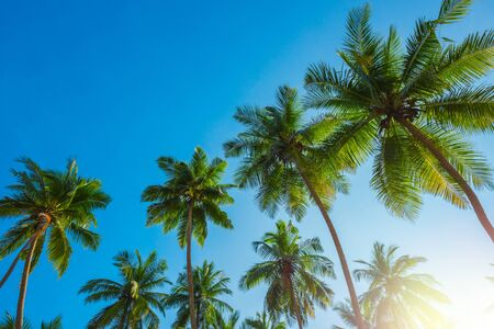 Tropical coconut palm trees at sunny day with blue sky Imagens