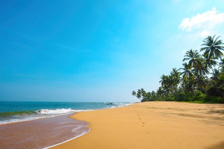 Beautiful beach on tropical island with coconut palm trees and clean sand at sunny summer day