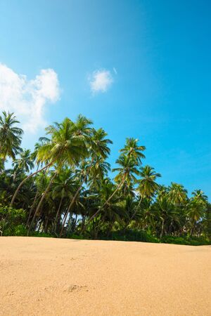Beach on tropical island with coconut palm trees and clean sand at sunny summer day