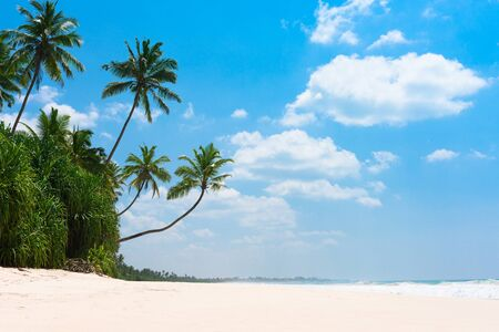 Coconut palm trees at tropical beach on island resort Imagens