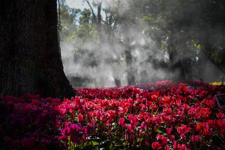 Light splashing through the field of flowers