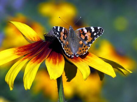 butterfly on flower Stock Photo - 6070587