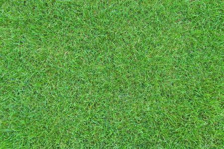 Green grass lawn top view photo