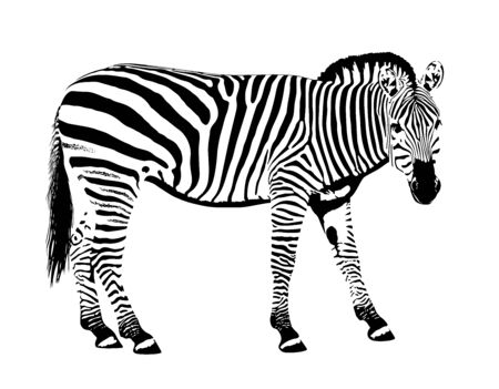 Illustration vectorielle de zèbre animal pochoir masque
