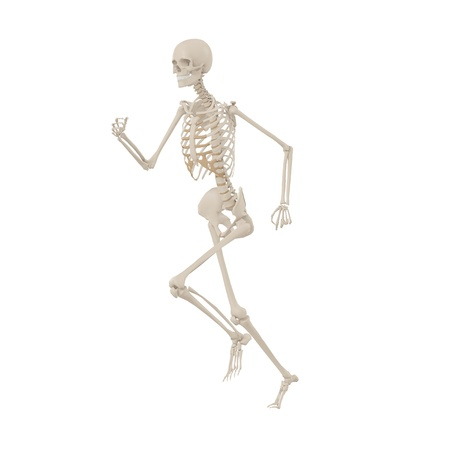 roentgen: Human Skeleton running