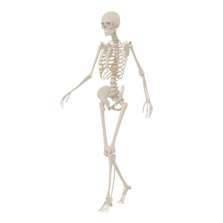 roentgen: Human Skeleton going Stock Photo