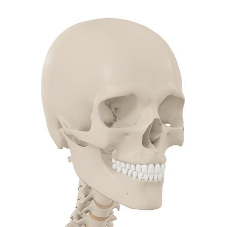 abstract tooth: Human Skull Stock Photo