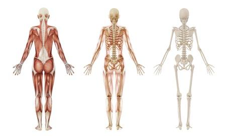 여성의 근육과 골격