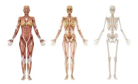hip fracture: Mujer m�sculos y el esqueleto