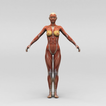 Athletic female human anatomy and muscles photo