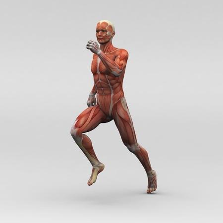 gente pobre: Anatom�a masculina humana y m�sculos