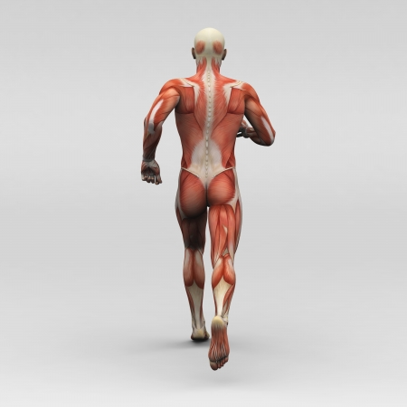 남성 인간의 해부학과 근육 스톡 콘텐츠
