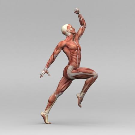 anatomie mens: Atletische mannelijke menselijke anatomie en spieren Stockfoto