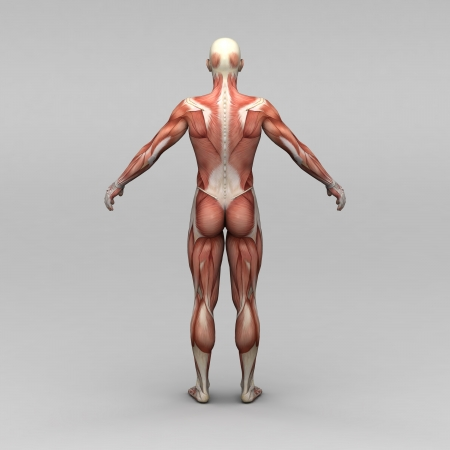 poor health: Athletic male human anatomy and muscles