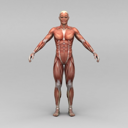 human meat: Athletic male human anatomy and muscles