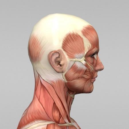 musculo: Atl�tica anatom�a masculina humana y m�sculos